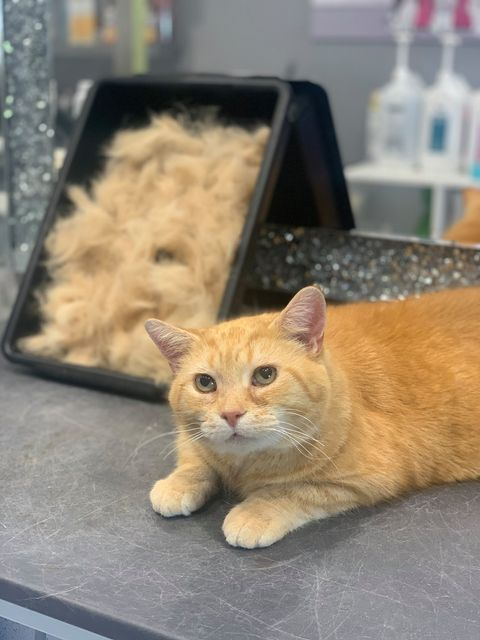 Cat Grooming Walsall